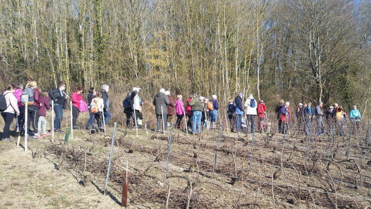 ARPSA Photo des randonneurs dans les vignes