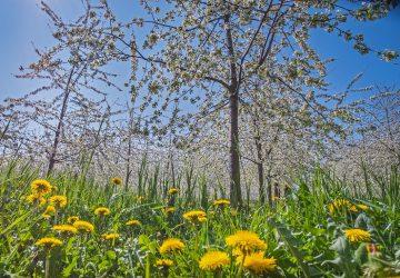 Plantation arbre foret de barbillon